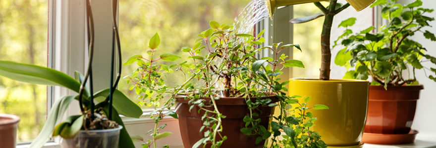 Ambiance végétale
